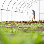 Produce from GVSU educational farm will be donated throughout growing season